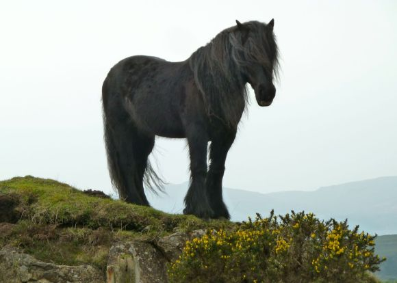 Horse on the Isle of Skye