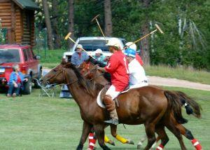 2014 Polo Photo #5